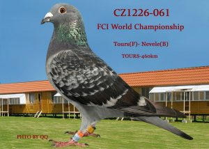 cz-061-1226-16